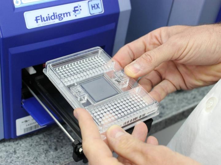 Chips de DNA certificam matrizes de tambaqui de cativeiro para produção de alevinos