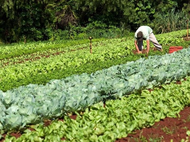 Programa de Aquisição de Alimentos recebe R$ 10mi de emendas parlamentares