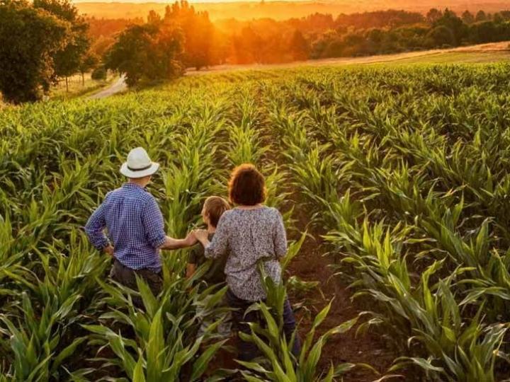 Mercado CNA oferece funcionalidades ao produtor