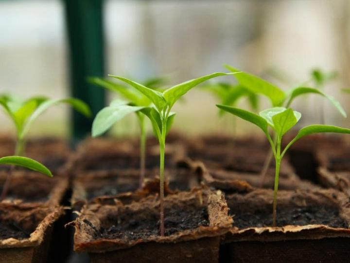 Yara promove webinars sobre nutrição de plantas