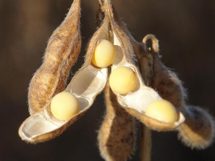 FMC apresenta projeto inovador para cultura da soja