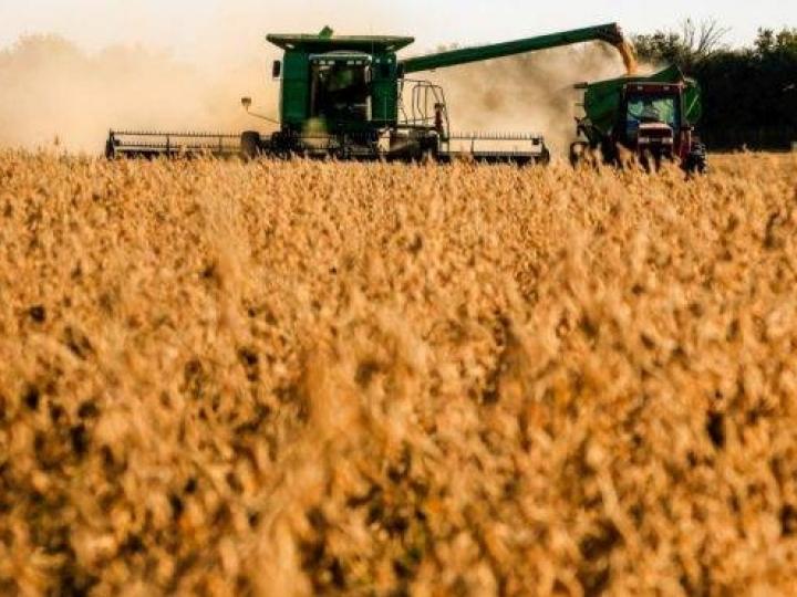 Agropecuária foi o único setor com desempenho positivo no 1º trimestre