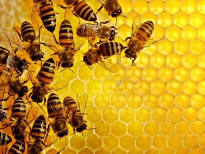 Práticas amigáveis entre agricultura e apicultura