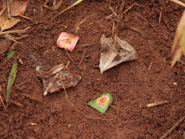 A metodologia holandesa chamada Tea Bag Index (TBI) está sendo usada por cientistas da Embrapa Pecuária Sudeste em parceria com a Universidade Federal de São Carlos (UFSCar) - Foto: Luiz Paiva