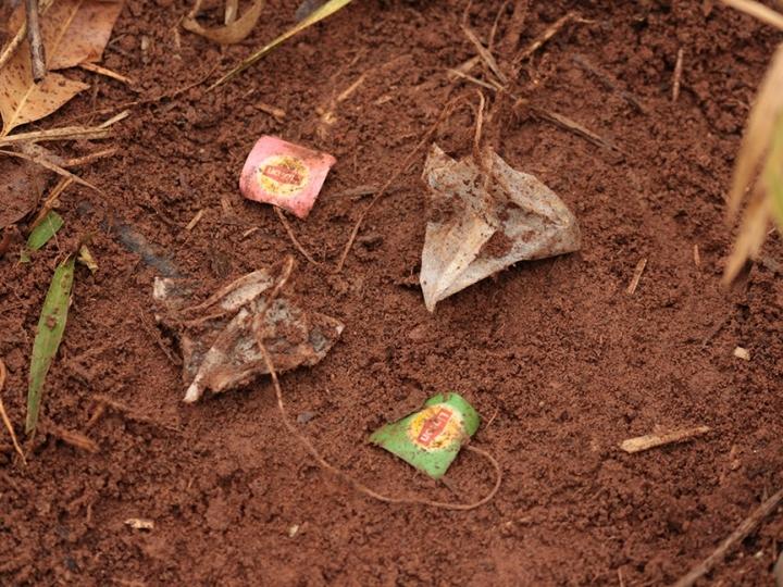 Cientistas usam saquinhos de chá para avaliar qualidade do solo