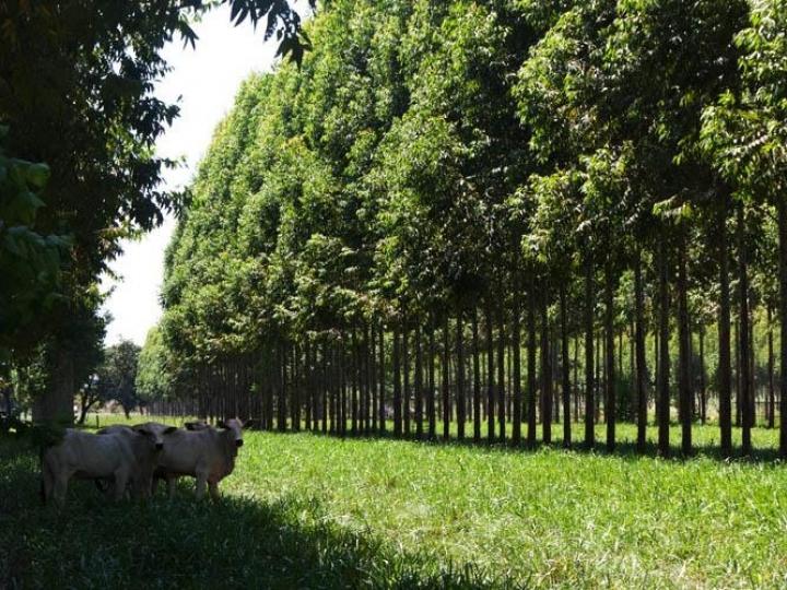 Comissão vai acompanhar políticas de baixa emissão de carbono na agricultura