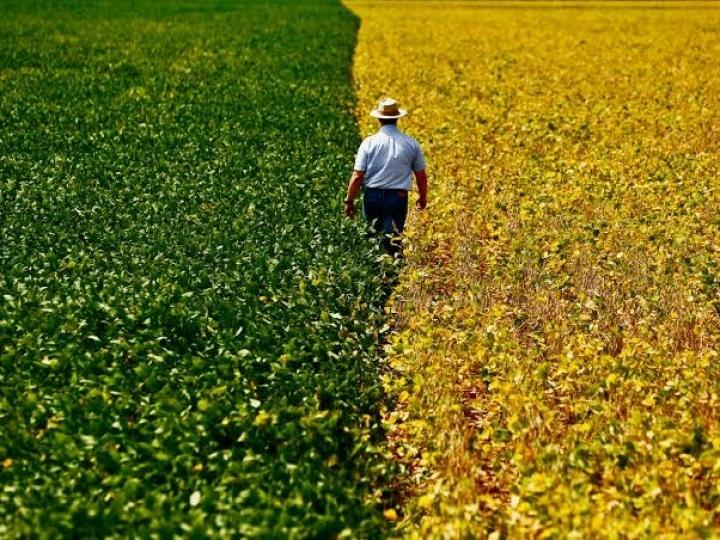PIB do agronegócio cresce 3,78% de janeiro a abril de 2020