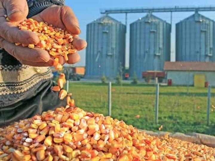 Bayer alerta para a importância do manejo preventivo em grãos armazenados
