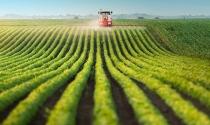 PIB do agronegócio cresce 4,62% de janeiro a maio