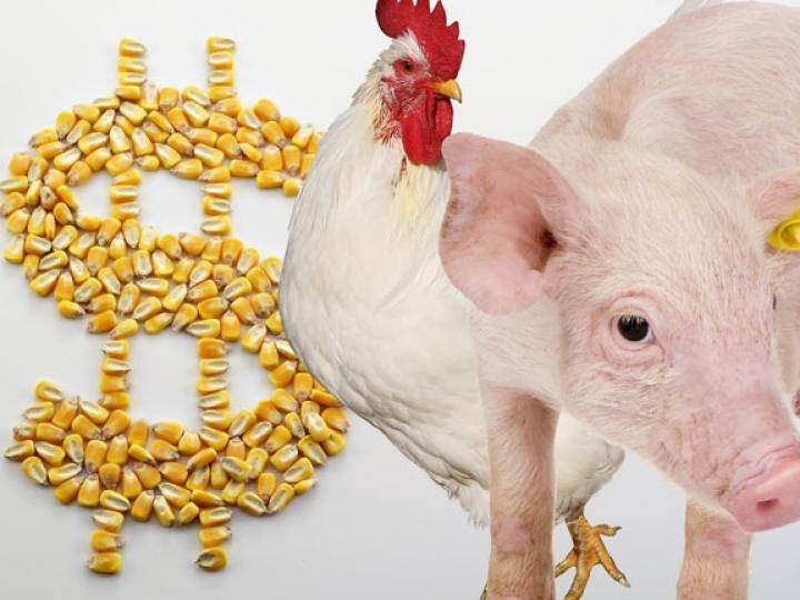 Impactos da reforma tributária para o setor de aves e suínos