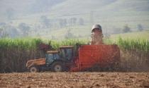 Colheita mecanizada da cana-de-açúcar atinge 95,3% das áreas produtivas na safra 2018/19