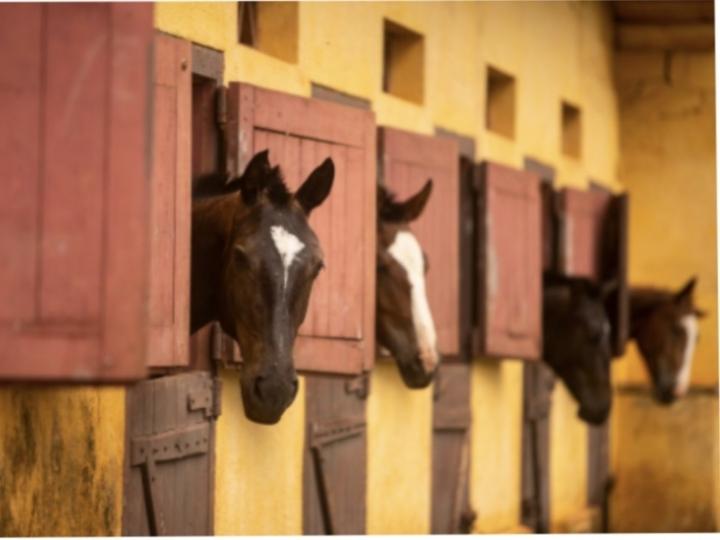 'Protocolo Sanitário Unificado Equinos e Bovinos' é entregue às Secretarias de Agricultura e Abastecimento e de Esportes de SP