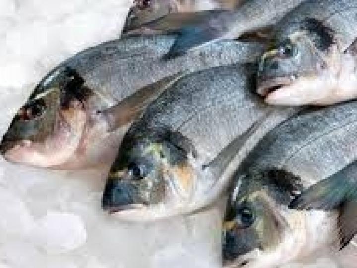 China habilita mais três plantas brasileiras para exportação de pescado