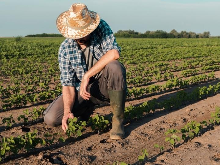 Seguro Rural atinge a marca de 1 milhão de apólices contratadas com auxílio do governo federal