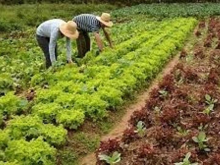 Bolsonaro veta auxílio emergencial a agricultor familiar que não tiver recebido o benefício