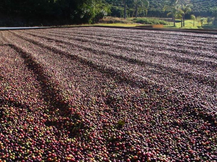 Fintech Agro fecha parceria com Augme Capital para crédito a produtores de café