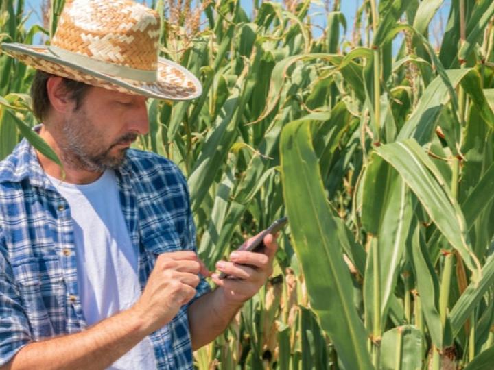 Produtores rurais passam a emitir títulos agrícolas eletrônicos
