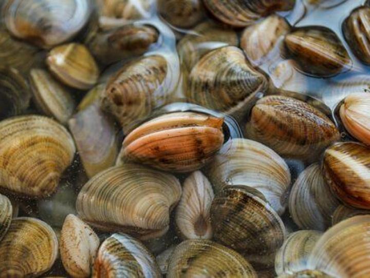 Projeto avalia a captura de moluscos bivalves no litoral paranaense e suas consequências sobre a biodiversidade costeira