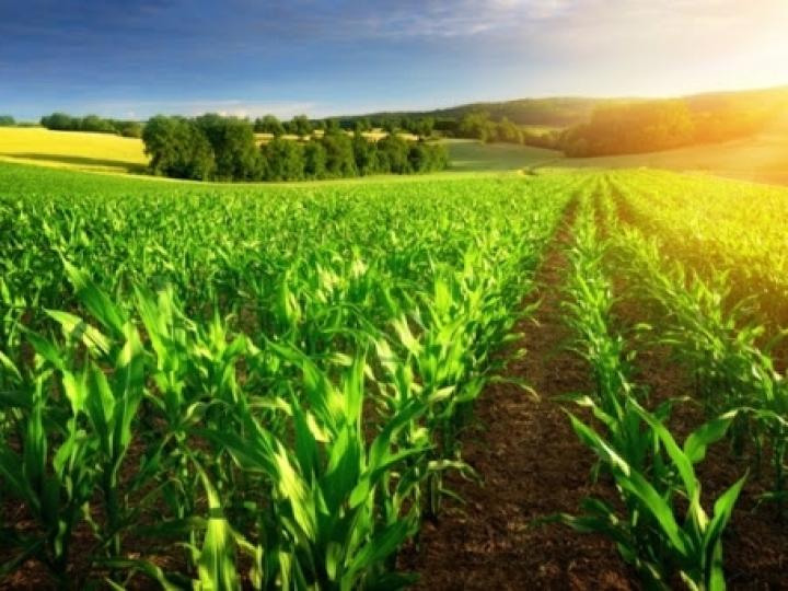 VBP da agropecuária deve crescer 12,5% em 2020