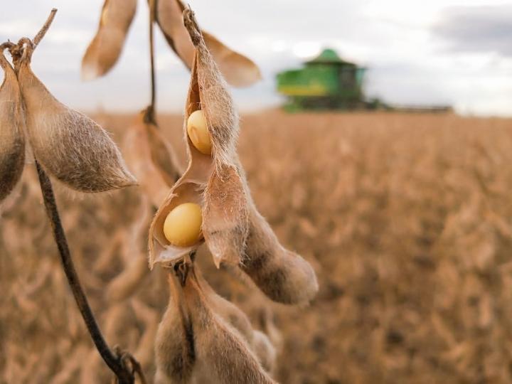 CESB investe na digitalização para levar mais informações ao setor de soja