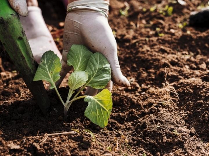 Recorde de registros de defensivos agrícolas de controle biológico