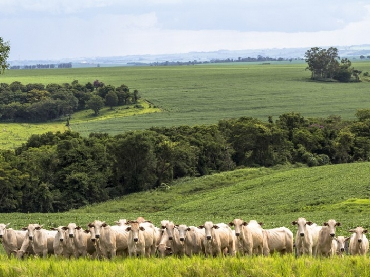 Valor da Produção Agropecuária deste ano está estimado em R$ 771,4 bilhões