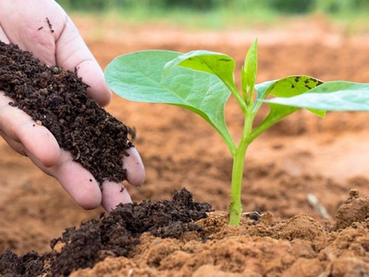 Podemos alimentar o mundo sem fertilizantes?