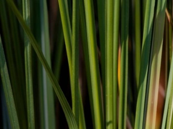 Estratégia para mudança no clima por meio da adoção de biocombustíveis