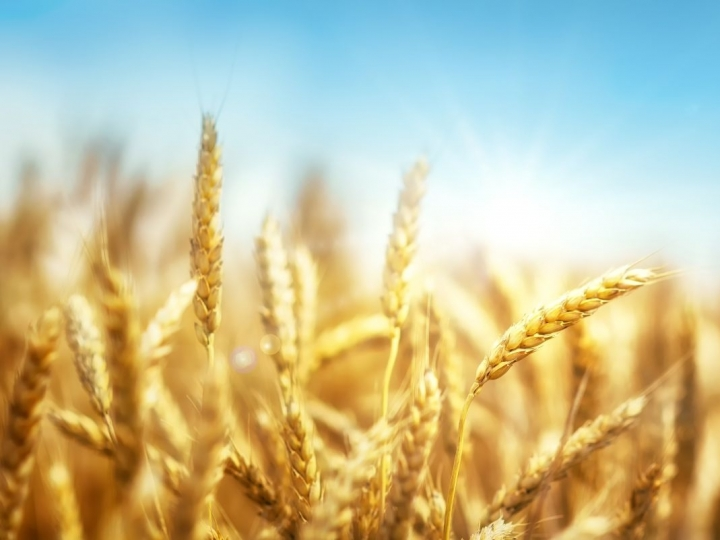 Consumo de trigo aumentou 15% durante pandemia