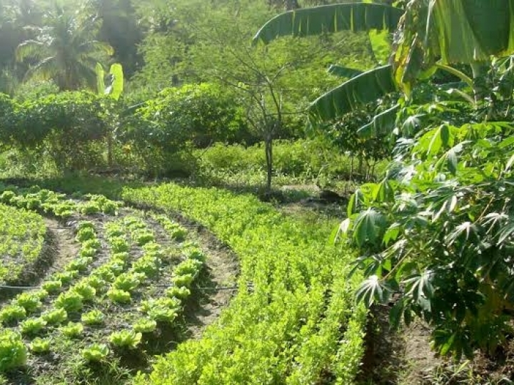 Da floresta à mesa: agrofloresta para a alta gastronomia