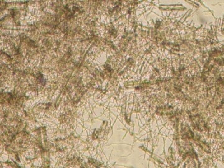 Coquetel enzimático potencializa produção de etanol 2G