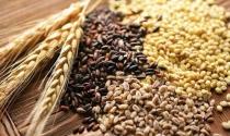 Conab aprimora metodologia de grãos e prepara estimativas sobre a pecuária