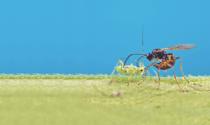 Novas especificações de referência ampliam as opções para o registro de defensivos biológicos