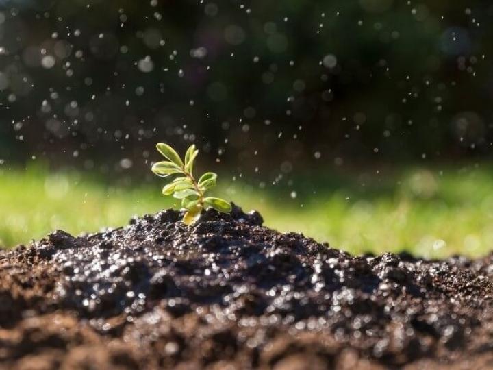 FAO lança relatório sobre biodiversidade do solo