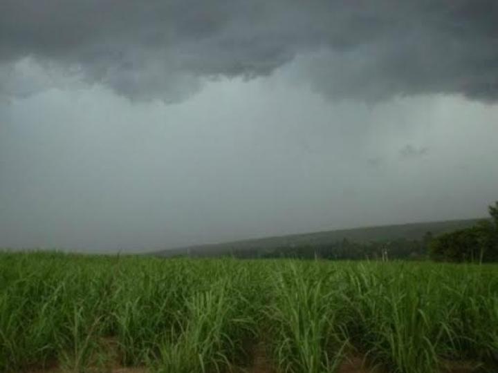 Atraso nas chuvas refletirá nos canaviais