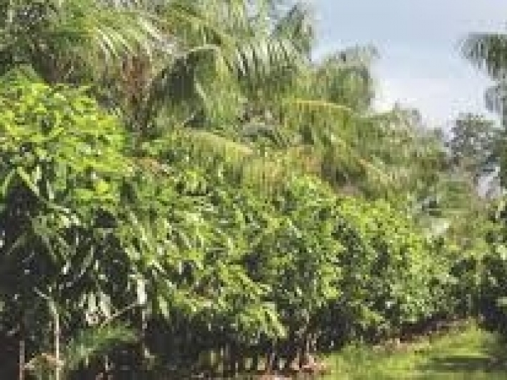 Sistemas agroflorestais são viáveis em relevos montanhosos