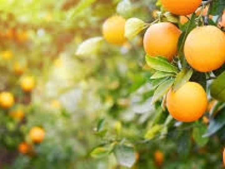 Falta de acordo com o Mercosul tirou o suco de laranja das prateleiras sul-coreanas