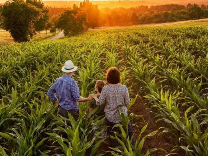 Mais de 10 mil agricultores familiares participam de projeto-piloto de seguro rural