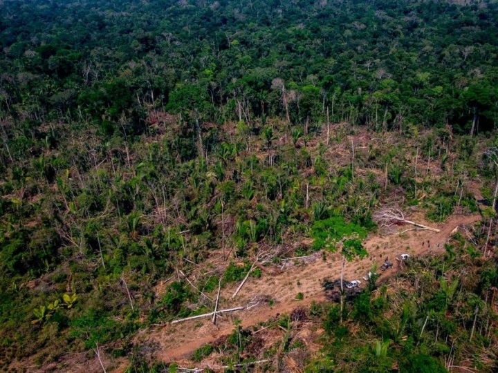 Força-Tarefa da Amazônia obtém bloqueio de quase R$ 29mi em bens de infrator ambiental