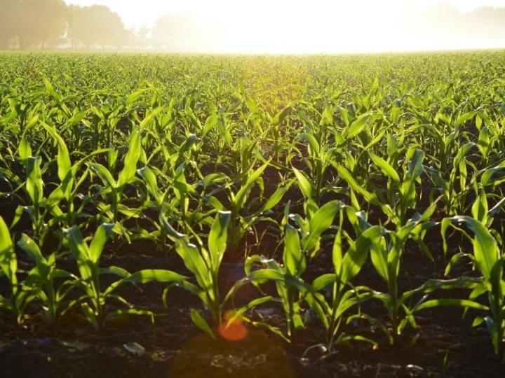 Agricultura 4.0 provoca novos movimentos para aumentar a produção e sustentabilidade