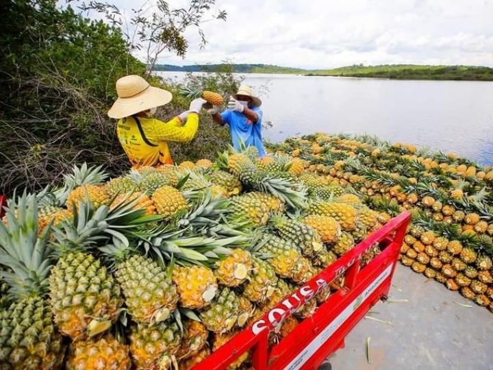 Indicação Geográfica agrega valor a produtos da biodiversidade no Norte do país
