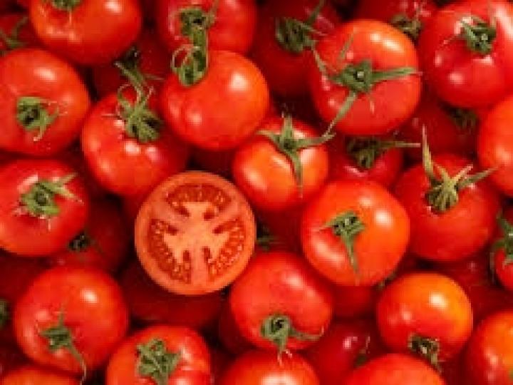 Alta temperatura influencia cultura do tomate