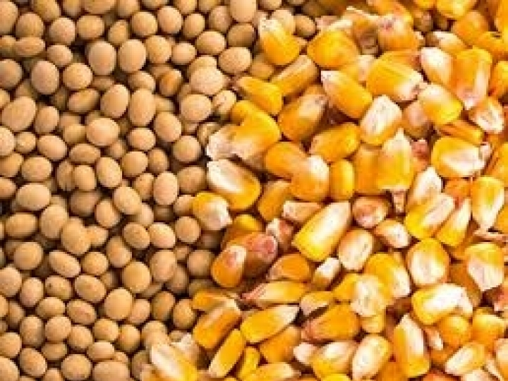 Syngenta passa a exportar soja e milho de seus clientes diretamente para a China