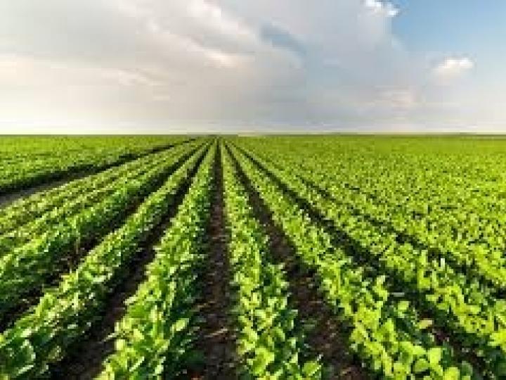 Yara apresenta suas inovações para grãos na Safratec Cocamar 2021