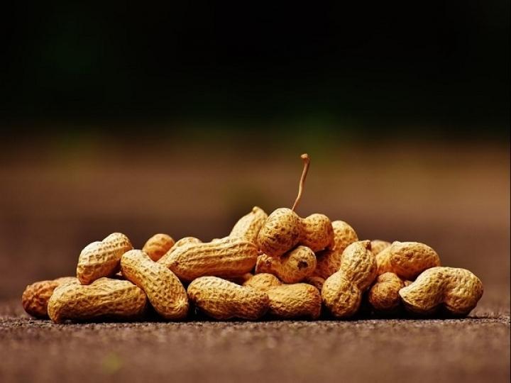 Soja e Amendoim mantêm tendência de  aumento de área e produção na safra 2020/21