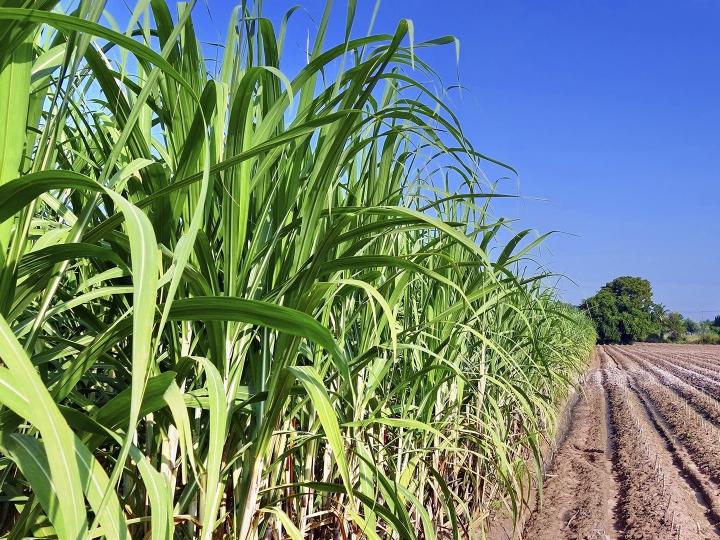 Sustentabilidade do cultivo de cana-de-açúcar para produção de bioenergia