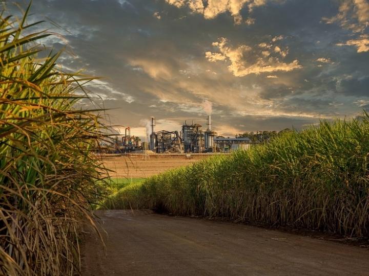 Soluções da Sumitomo Chemical para cana-de-açúcar