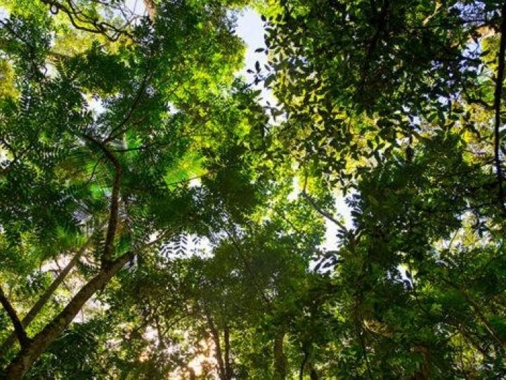 Serviço Florestal Brasileiro e BNDES iniciam parceria para ampliar concessões florestais