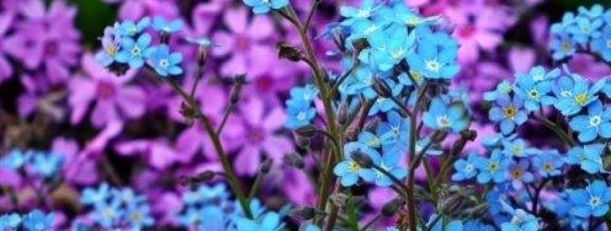 Impedimento da venda de flores pode repetir cenas de grandes perdas da produção no Dia da Mulher