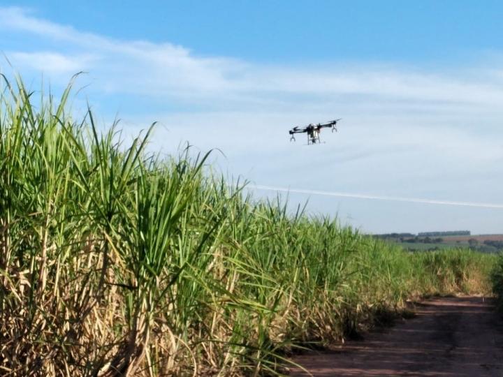 Unidades produtoras contam com nova tecnologia para controle eficaz da broca-da-cana na safra 2021-22